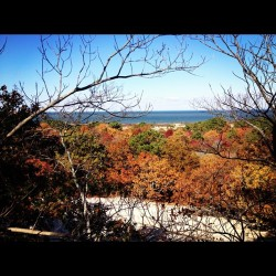 Long Island Pine Dunes in fall.