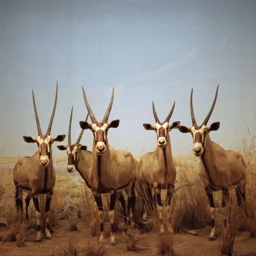 fishfinder7f:  the gemsbok 5 by justinphilipwaldinger (www.justinwaldinger.com) on Flickr.
