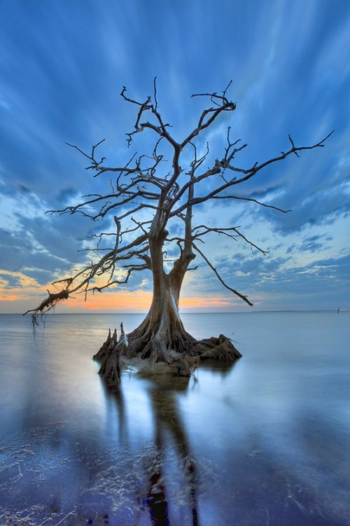 earthlynation:  lone tree source