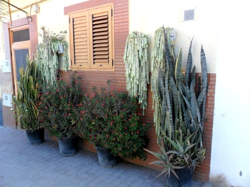 Cactus and Succulents in pots and hanging baskets, Puerto De las Nieves, Gran Canaria, Canary Islands.