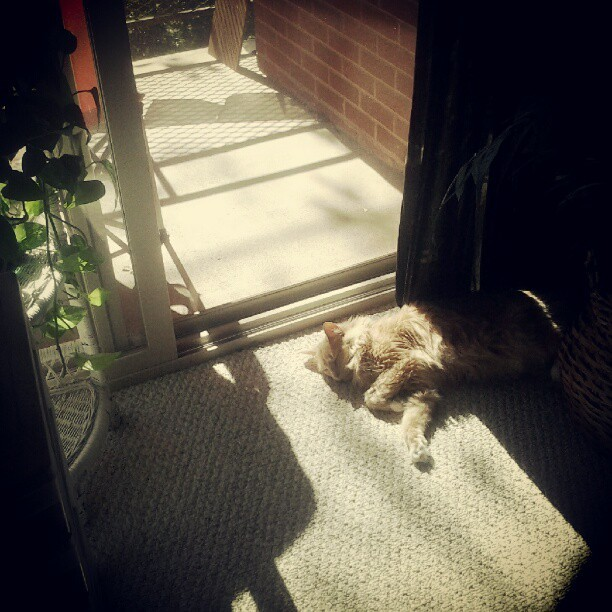 Another victim of the kitty sleep ray! #cat #cute #sleep #nap #sun #sunday