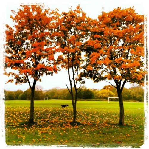 Orange trees #nature #beautiful #leaves #autumn #park