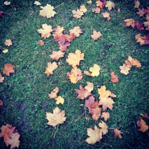 #leaves #autumn #park #nature