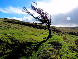 A lone tree on the moors.