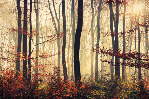 treeporn:  woodendreams: (by tadzio89)