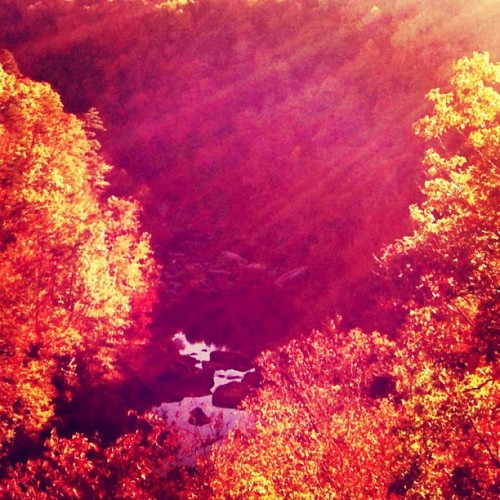 Fall in the south…how I love you so!!! #littlerivercanyon #fortpayne #alabama #autumn #fall #leaves #foliage #trees #sky