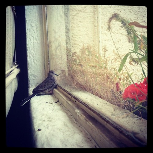 What is that noise :o #bird #window #nature