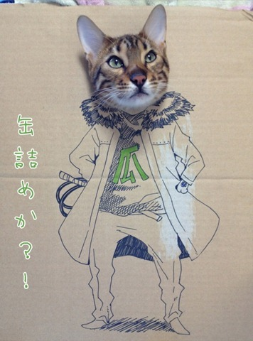 Cardboard Cat Portraits