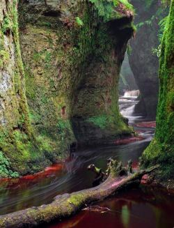 almostalice84:  Mossy Canyon, Finnich Glen, Killearn, Scotland