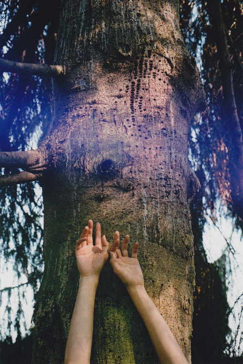 somuchoxygen:  thesetravelingfeet:  lifelong fascination and love for trees. <3  Me too!