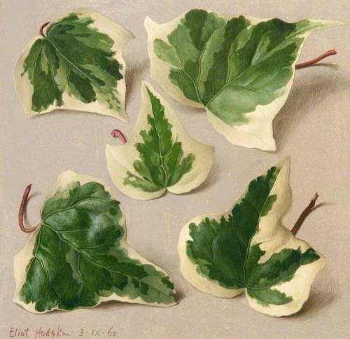 dipot:  Eliot Hodgkin: Five Variegated Ivy Leaves, 1960. Tempera on panel, 24 × 25.5 cm.