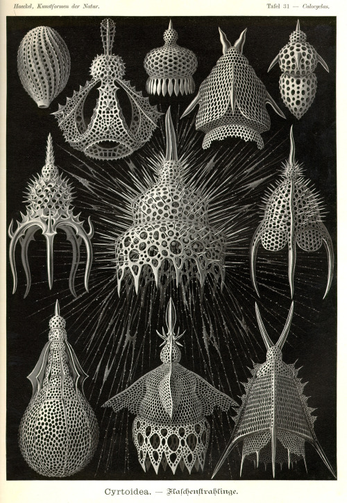 viscerocranium:  'Cyrtoidea' - Ernst Haeckel, from 'Kunstformen der Natur' (1899)One of my favourites from an incredible book of plates.