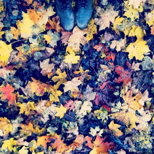 muddybeauty. #stockholm #sweden #travel #autumn #leaves (at Ulriksdals Slottspark)