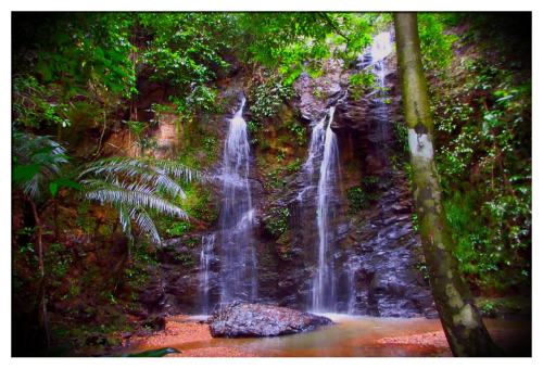 "The Klong Jark Waterfall Koh Lanta - Krabi, Thailand In true ""Why You Go There?"" fashion the hike (or a better descriptive would be 'jungle trek') to the waterfall was no easy task and was a bit scary at times. Most people ride on an elephant to the waterfall but since we love hiking we opted for the walk to one of the best sights to see on the island of Koa Lanta. We did our homework before setting out on the hike that day and were told by a local that it is a nice hike that is best after a rain because the waterfall only flows with water when it rains. A short storm hit the island that morning so we decided to head to the waterfall that afternoon. We parked the motorbike by the main road to avoid the risk of damaging the bike on the rough road leading to the trailhead and to add a kilometer to the hike. The walk also takes you by an elephant park that is worth a visit since its located just outside the trailhead. We asked a few of the elephant guides for more detailed directions and they pointed us in the right direction but that was as specific as they got. A British couple arrived at the trail at the same time as us so we were a crew of four to start the hike. The trail was almost impossible to find because the jungle was winning the battle against the trail and the rain that morning made things quite slick and muddy. Here I'll also mention that the jungle is also full of monkeys, large insects, and a number of tropical creatures… We saw a large snake that got run over on the road the night before so that was also on our minds as we started into the denser jungle! We lost the trail several times early on as there are no signs or trail markings, but each time we were able to pick it up again and knew that if we stayed close to the small stream that we were heading in the right direction. It wasn't long until we found ourselves walking in the actual river that had risen due to the recent rain and the British couple decided they weren't comfortable with the waterfall adventure any longer. We also told them there was some risk involved with them following me and Vania into any adventure as we have a track record of getting ourselves into some crazy situations while traveling… The couple turned back but we pressed on. The hike only got harder, wetter, muddier, and steeper as we got deeper into the jungle and at times we were knee deep in water, but the water was crystal clear so you could see if there were any creatures looming in the jungle waters. We thought of turning back several times as were getting deeper and deeper into the jungle with no sign of a waterfall and no sound of crashing water. We decided to put a time limit on the journey and gave ourselves 15min to make it to the falls or turn back. Shortly after this we came upon a huge cave that was simply amazing but still no waterfall so we pressed on. The tour guides say that it's a 1.8km hike to the falls but the journey seems much longer… It didn't help that I decided to where flipflops… In the end we made it to the waterfall and it was worth the jungle adventure! The falls were flowing well and it was quite a magical place hidden deep within the island jungle… We were the only ones there! The sun was shining perfectly through the dense palms surrounding the waterfall and illuminating the rocks and the water. It was an amazing sight and the highlight of the trip to Koh Lanta!!!"