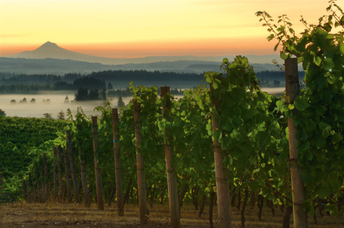 Of course Willamette Valley won as one of the top wine valley destinations!  Read about it here: http://www.kval.com/news/local/Willamette-Valley-Named-A-Top-Destination-for-Wine—174677051.html