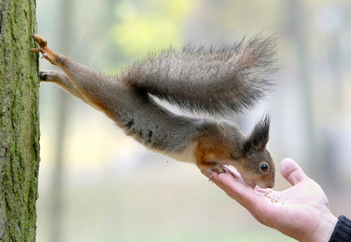 Morning! Minsk, Belarus: a squirrel stretches to eat a nut from a man's hand in a park  Photograph: Tatyana Zenkovich/EPA
