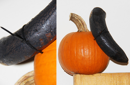 BLACK BANANA zip tied to PUMPKIN (Scandalous decor for superiority) Live in a world of beauty and wonder, consider forgiveness relentlessly, 2012 BUY IT ON ETSY NOW •º•