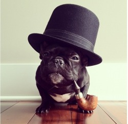 funnyordie:  Distinguished Dog