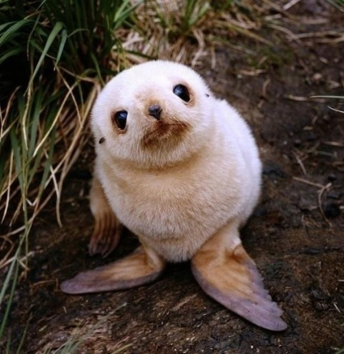 buthereisthething:  hello!  OMG I WANNA SQUEEZE IT