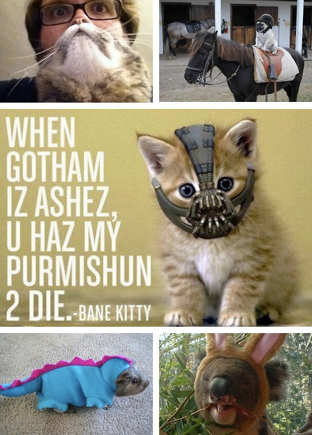 Animals Who Do Halloween Better Than Humans [Click for full gallery]