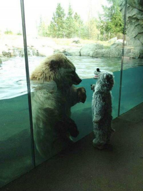 Little Kid Shows Polar Bear Solidarity Stay strong man. We're gonna get you outta here.