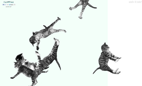 laughingsquid:  Cat Bounce, A Website of Bouncing Cats