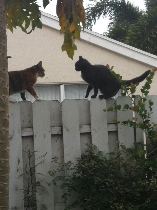 stop that cats. there is plenty of fence for both of you. well, not in terms of width, but you know what i mean. just go to opposite sides.
