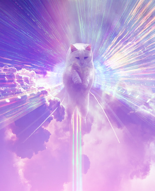 fuckyeahdementia:  holy cat!  The god of the internet.