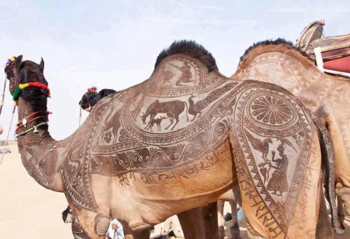 camel haircut art