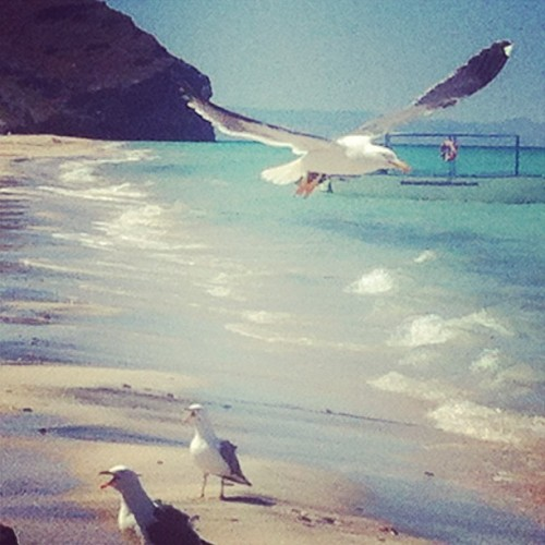 Beach número 5. #beach #blue #birds #seagull #sea #sky #flying #waves #surf #sun #sunset #shore #nature #mexico #bajacaliforniasur #bcs #bajacalifornia #travel