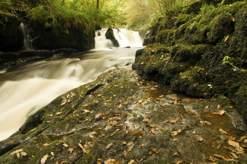 Clare Glens, Newport, Co Tipperary (by John Carey .)
