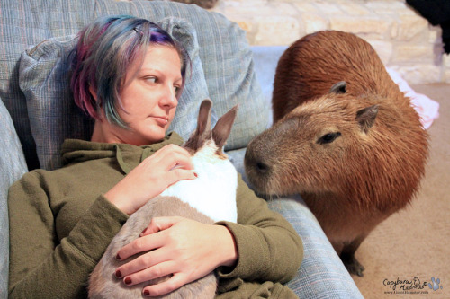 Garibaldi Rous checks out Maple WoMER (World's Most Expensive Rabbit) as she rests on Coral. Gari does like to chase Maple but I don't think he would ever hurt her. (Maple has been sick and required a couple of surgeries, which is how she got her new last name. She is recovering in this photo.)