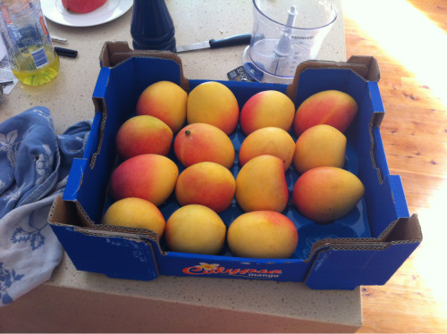 ocean-breez:  mango—butter:  freespirit-kids:  mango season is the best season  aren't they peaches?