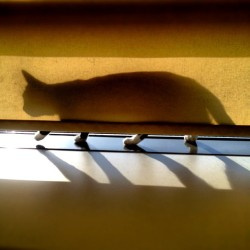 DJ Pisi, spotted :) #cat #shadow (at Europa FM)