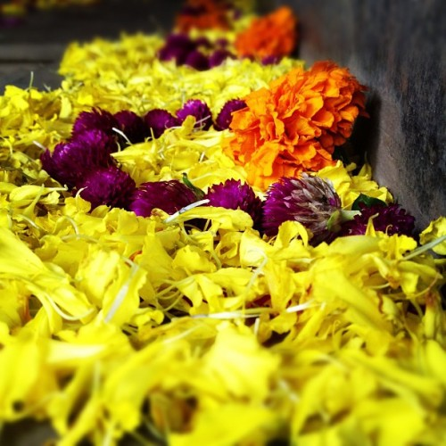 Festival flowers. #bangalore #india #igers #instafun #instaoftheday #picoftheday  (at Havas Worldwide Bangalore)
