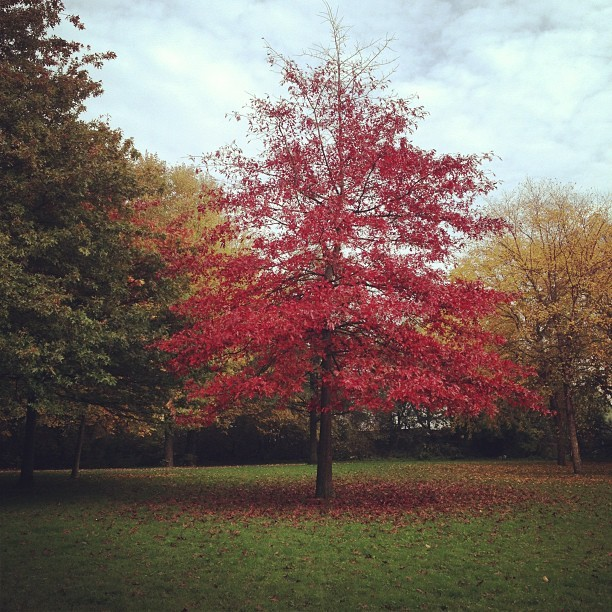 #red #tree (at Flevopark)