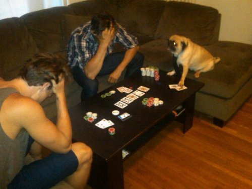 collegehumor:  Dog Plays Poker I feel like I've been here before…