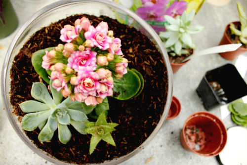 knowwhenitsadream:  Terrarium ~ April 2012