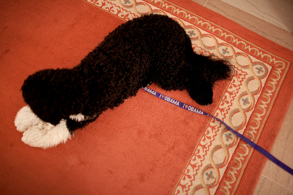 The Obama family dog, Bo, lies on a carpet in the White House on July 27, 2009. (Official White House Photo by Chuck Kennedy) Most iconic Pete Souza photos of Obama family's first 4 years in the White House   #66