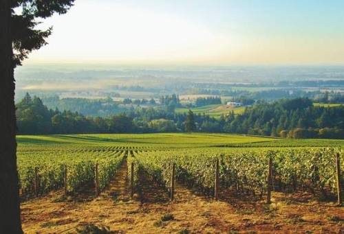 Bend Bulletin explores the Willamette Valley Dundee Hill wineries Enjoy the read! http://www.bendbulletin.com/article/20121014/NEWS0107/210140347/