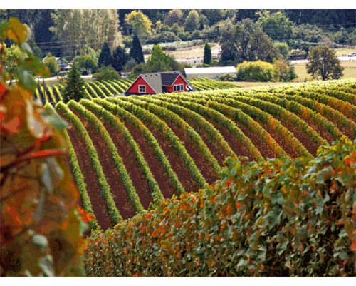 Portland a great springboard for exploring Oregon wineries http://www.bellinghamherald.com/2012/10/08/2707993/portland-a-good-springboard-for.html