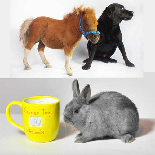 Which is cuter? My Lil' Pony or A Teacup Bunny?  What!? Super Tiny Animals narrated by Bubble from Ab Fab starts tonight at 10/9c