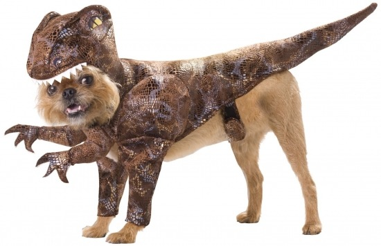 Amazon.com: Animal Planet PET20109 Raptor Dog Costume. clever girl