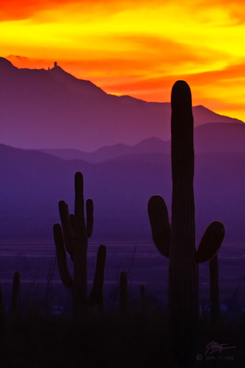 earth-song:  Saguaro Cacti, Saguaro National Park, AZKitt Peak National Observatory is in the background, on the left. The Observatory sits atop Kitt Peak, 6880 feet up in the Quinlan Mountains, 55 miles southwest of Tucson, AZ.The observatory features the largest and most diverse gathering of astronomical instruments in the world, with 23 telescopes. by John-Haig