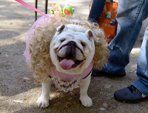 Ms Piggy at Tompkins Square Park Dog Halloween Parade