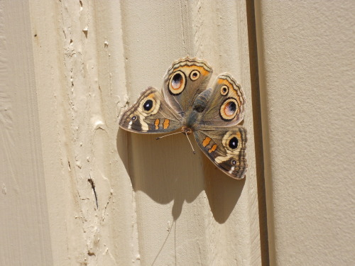 moths can be so pretty