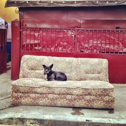 Sofa guard #dog #street