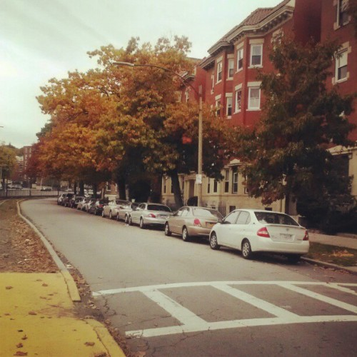 botulizard:  Comm ave with changing trees.