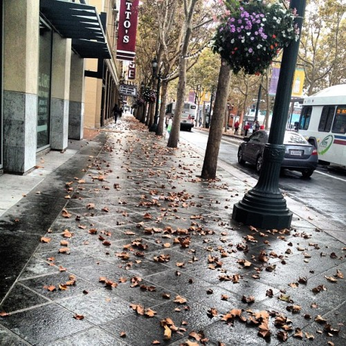 soniamarieee:  Gorgeous Fall morning 😍🍂🍁☔