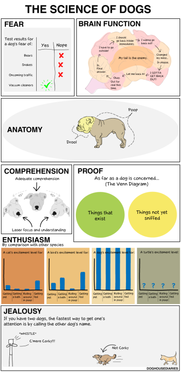 nevver:  The Science of the Dog